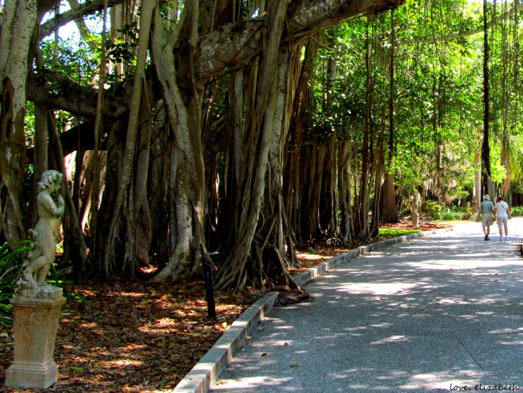 Banyan trees with their dangling roots spilling out onto the paths.
