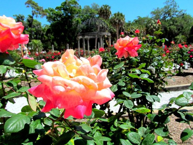 Mabel Ringling's Rose Garden