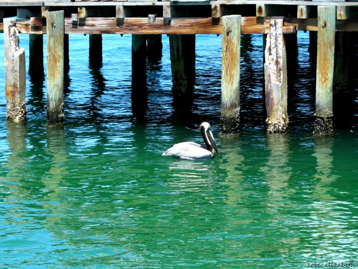 We saw plenty of pelicans hanging out at the pier.