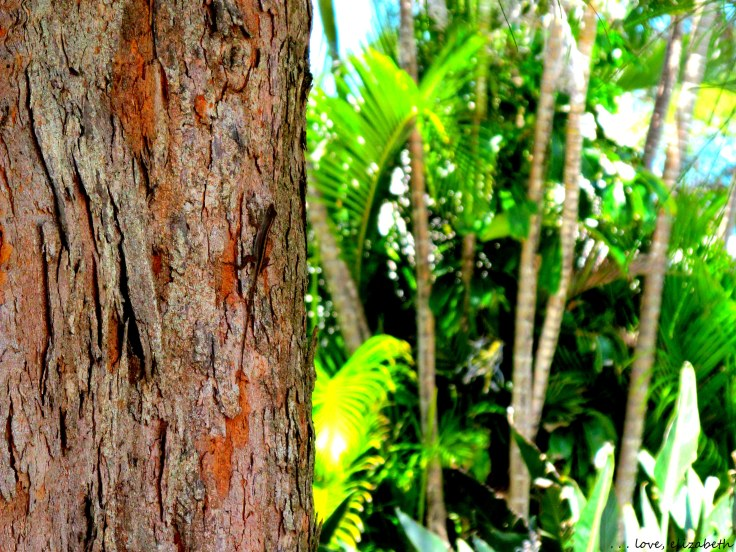 Can you spot the gecko?