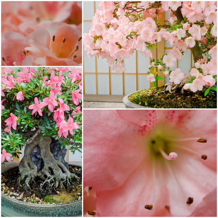 The flowering bonsai were the prettiest!