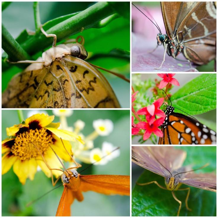 Butterflies at rest