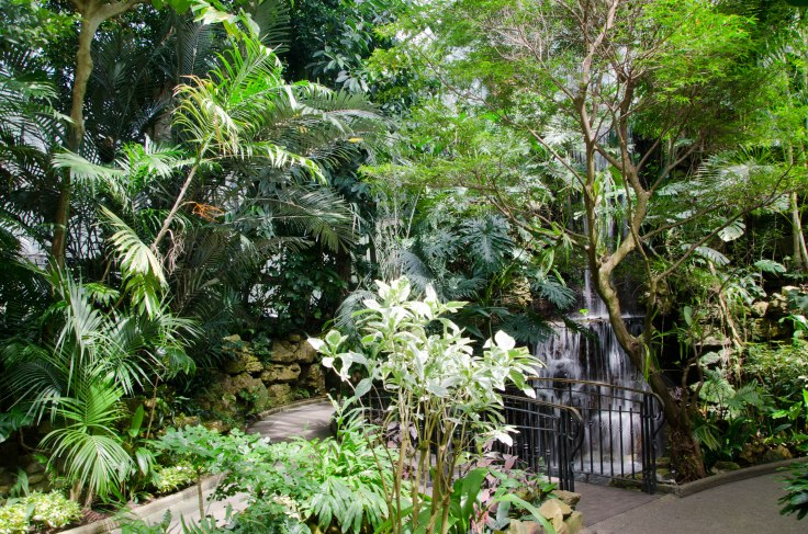 Waterfall in the Palm House