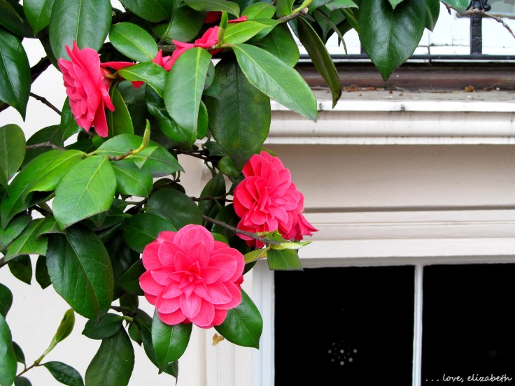 Pretty pink flowers adorning the front courtyard of a mansion