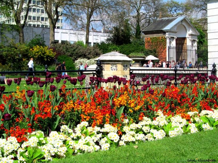 Hyde Park tulips