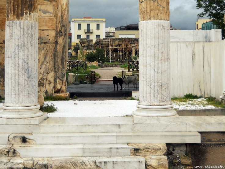 Stray Dogs in Athens