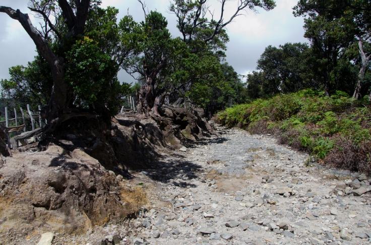 Volcano Path