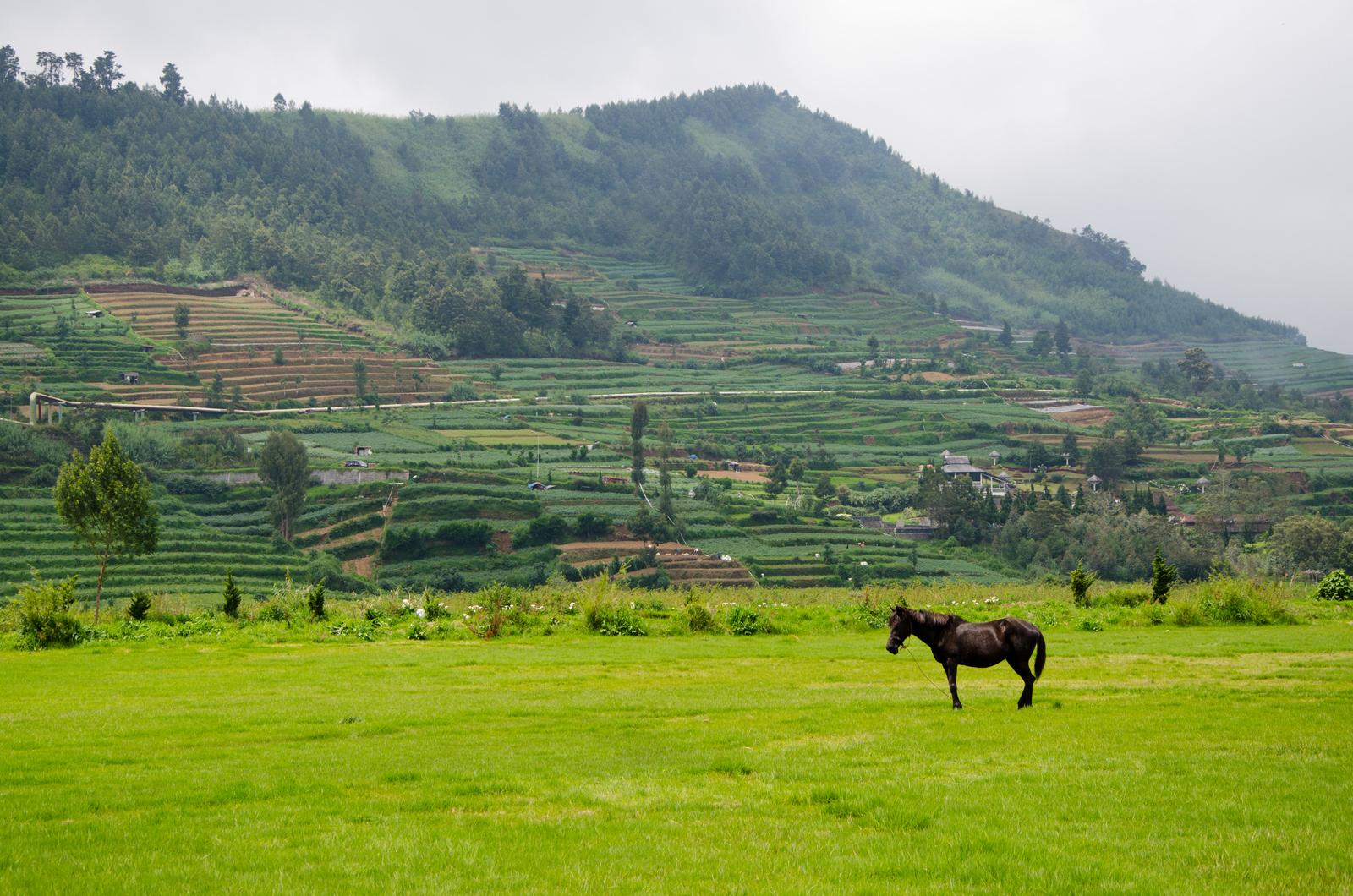 Dieng Plateau Paradise Tour Love Elizabeth Plateu Horse