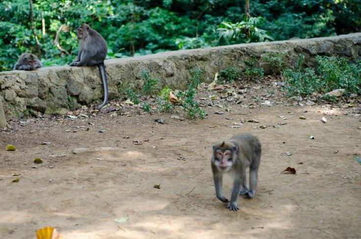 Stalker Monkey