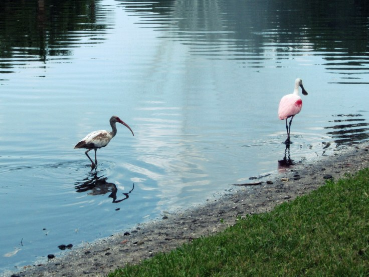Bird chase