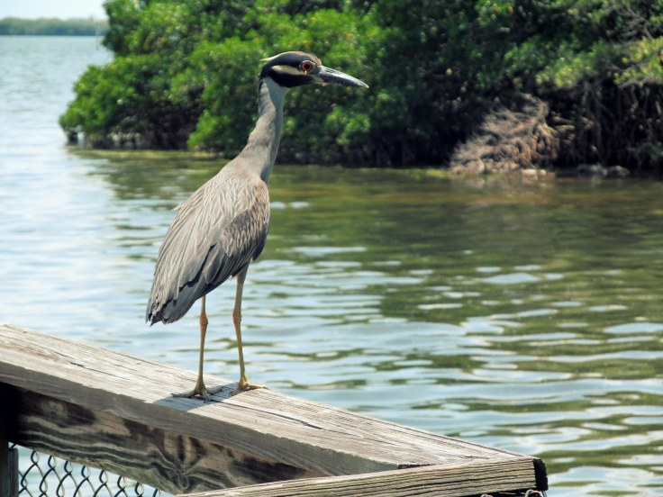 Bird by the water