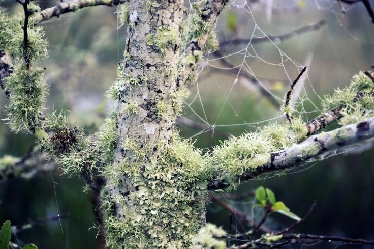 Swampy textures